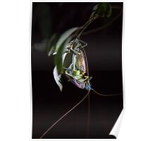 Mating Crickets Poster