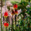 Wild flowers by Gerard Rotse