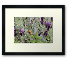 Lost in a Sea of Lavender Framed Print