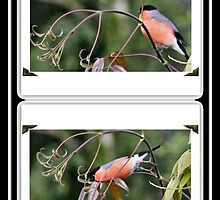 Bullfinch Booklet by missmoneypenny