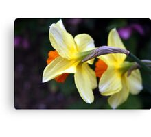 Daff Couple Canvas Print