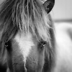 Icelandic Horse by Natalie Broome