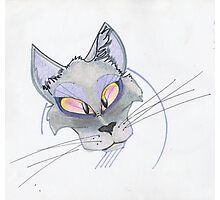 Lavender Cat Photographic Print