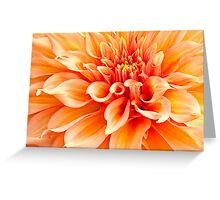 Dahlia in Orange Greeting Card