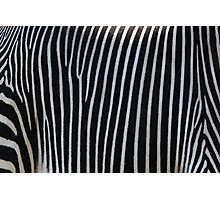 Zebra Stripe Photographic Print
