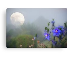 Moonlit in early summer Canvas Print