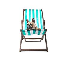 Pampered Pooch Photographic Print