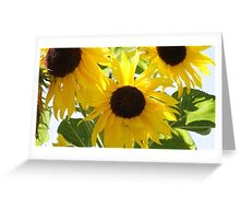 Garden - A trio of sunflowers greet the sun Greeting Card