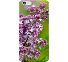 Lavender Lilacs iPhone Case/Skin