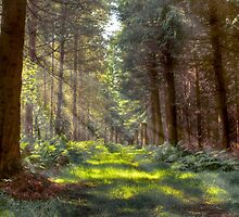 Bowmont Forest by GavinLiddle