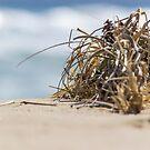Washed Ashore... by GerryMac