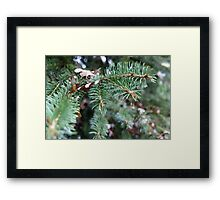 Some Green For Your Leaves Framed Print