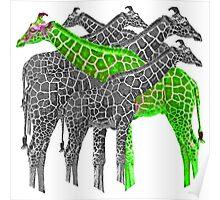 Color Giraffs  Poster