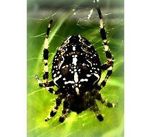 Cross Spider Photographic Print