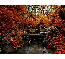 The Fall ~ Oregon Fall Colors ~ Photographic Print