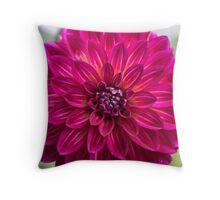 pink dahlia passion love Throw Pillow
