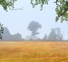 Tree  Co Antrim  Northern Ireland by Zdrojewski