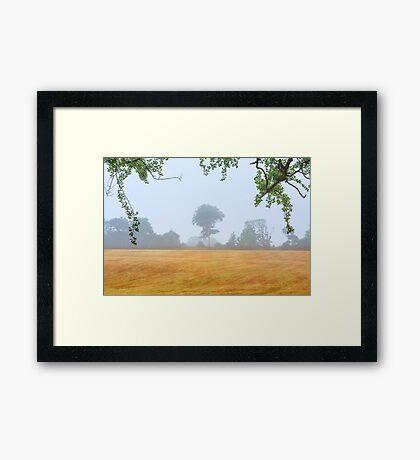 Tree  Co Antrim  Northern Ireland Framed Print