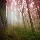 A Morning in Sutro Forest by Richard Mason