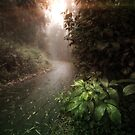 Pathway Through Sutro Forest by Richard Mason