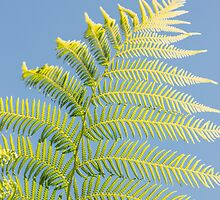 Exotic Fern by PatiDesigns