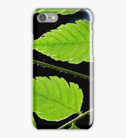 Nature's geometry iPhone Case/Skin