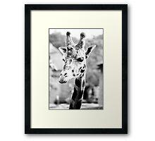 Monochrome Giraffe Portrait Framed Print