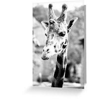 Monochrome Giraffe Portrait Greeting Card