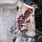 Old Wall by Francis Drake
