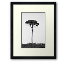 Nature in black and white Framed Print