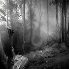 Enchanted Woods by Richard Mason