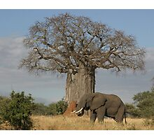 Africa's Icons - Baobab Tree, Termite Mound & Grey Elephant Photographic Print