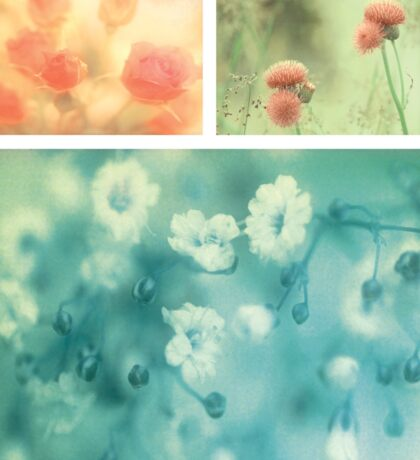 Collection ~ Flowers Sticker