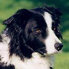 Best Dog Ever D.O.G.BLUE by Tina Hailey