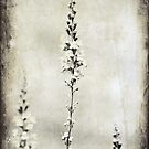 Wildflowers by Anne Staub