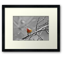 Melba Finch - Selective Coloring - Wildlife Colors of Gold and Red Framed Print