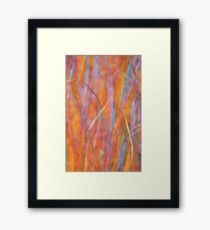 Living colors Framed Print