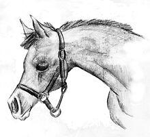 foal sketch by mindgoop