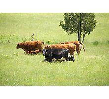 Cowgirls Photographic Print