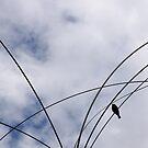 Bird by Anne Staub