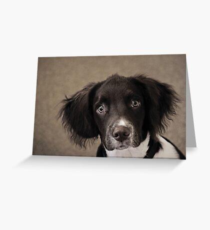 Springer Spaniel Greeting Card