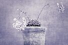 Flowers by Anne Staub