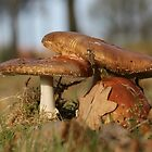 Fly agaric threesome by cuprum