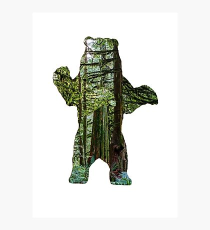 Forest Bear Photographic Print
