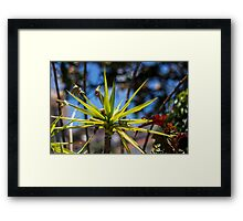 Spike Plant - Nature Photography  Framed Print