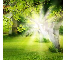 Natural spring background with sun Photographic Print