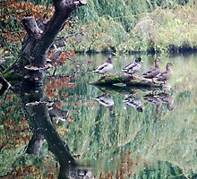 Monet Ducks at Witley Court by JohnYoung