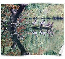 Monet Ducks at Witley Court Poster