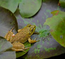 A frog on a leaf in a pond by Scott Mitchell