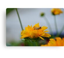 Grasshopper Resting Canvas Print